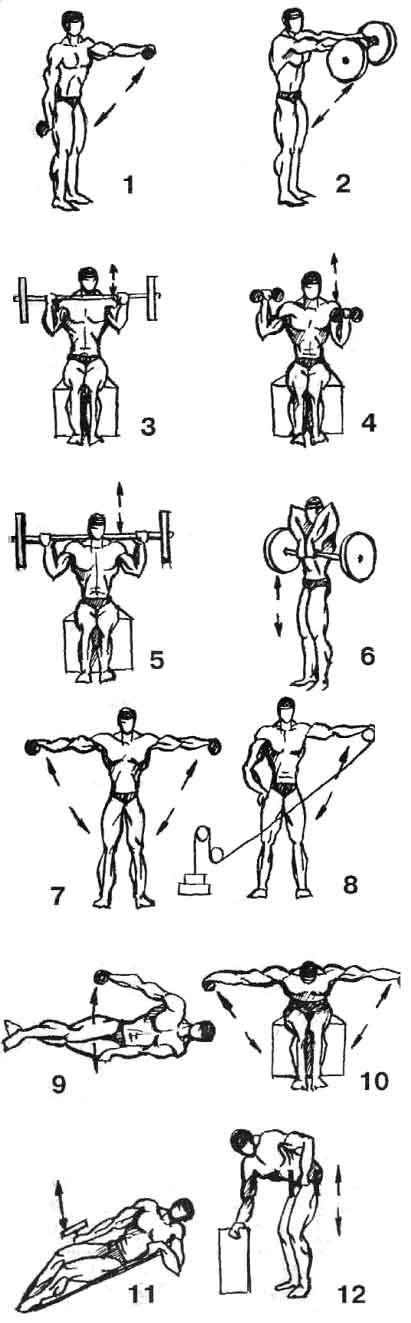 Упражнения с гантелями в картинках для мужчин дома 6