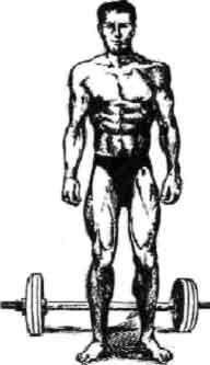 1. Сплит-программа предусматривает тренировку 1—2 групп Эктоморф