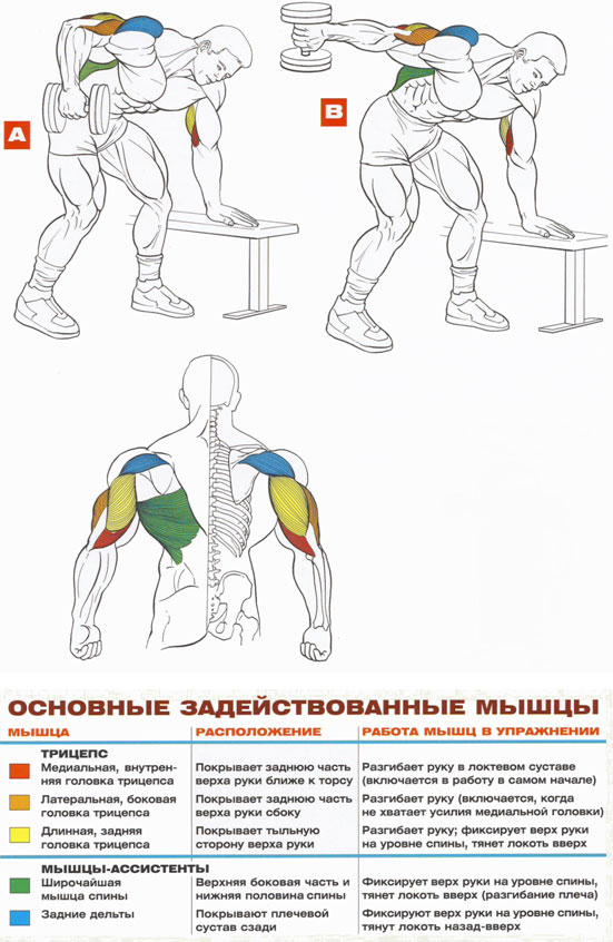 Упражнения на трицепс домашних условиях