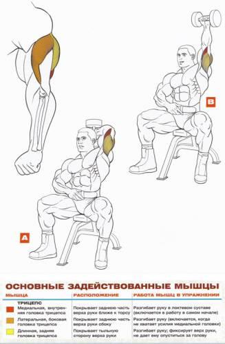Упражнения с гантелями в домашних условиях в картинках
