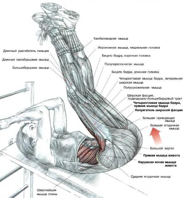 Как качать спину мышцы в домашних условиях 93