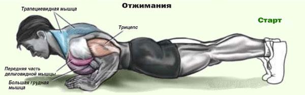 Начните с отжиманий с опорой на колени, потом перейдите на обычные отжимания, затем отжимания с опорой под ногами...