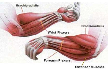 Упражнения на мышцы предплечья