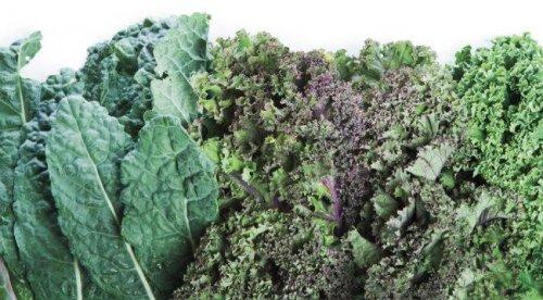 Кэйл - лучший зеленый салат для силовых атлетов