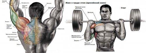 Упражнения со штангой на плечи (дельты)
