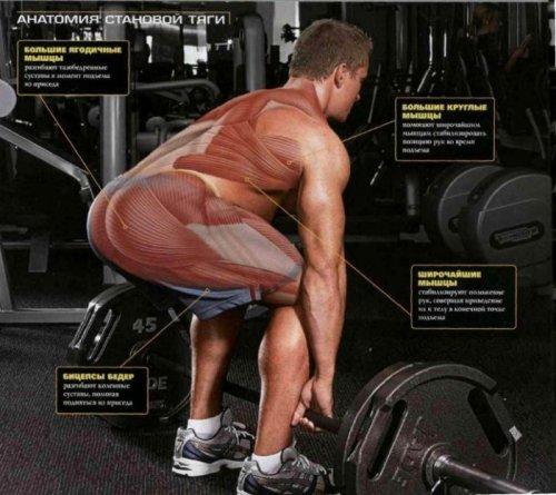 Становая тяга: виды и техника выполнения упражнения
